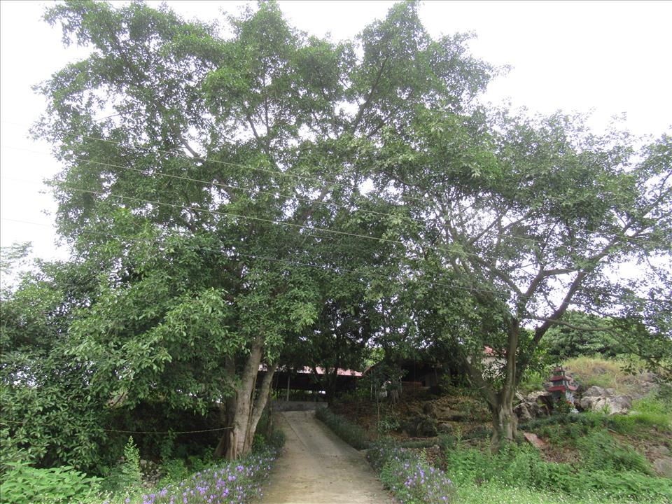 Chùa Tăng Má và ngôi miếu ở cửa Thạch Long động tại xã Thanh Lâm, huyện Thanh Thủy, tỉnh Phú Thọ.