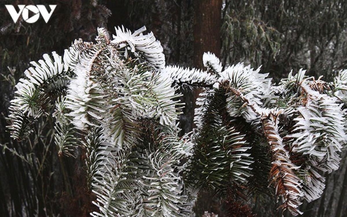 Từ ngày 7/1, các tỉnh miền Bắc sẽ đón đợt không khí lạnh mạnh gây ra đợt rét đậm rét hại, khả khả năng xuất hiện mưa tuyết, băng giá ở vùng núi cao.