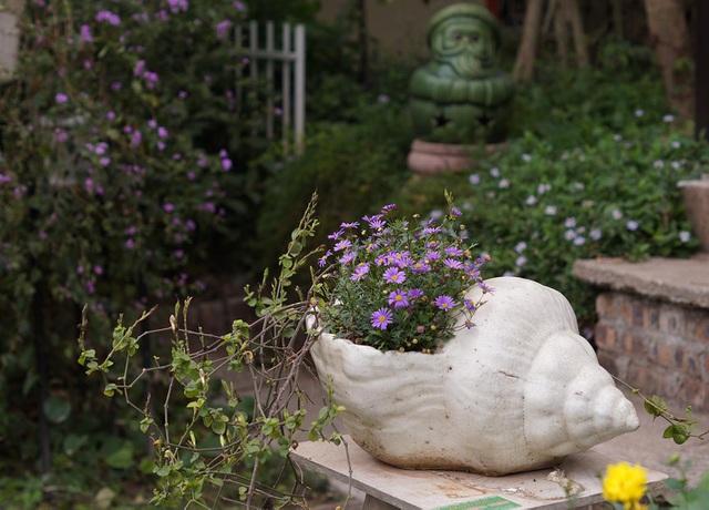 Mãn nhãn với vườn cúc cổ, đẹp mê hồn giữa lòng Hà Nội - 10