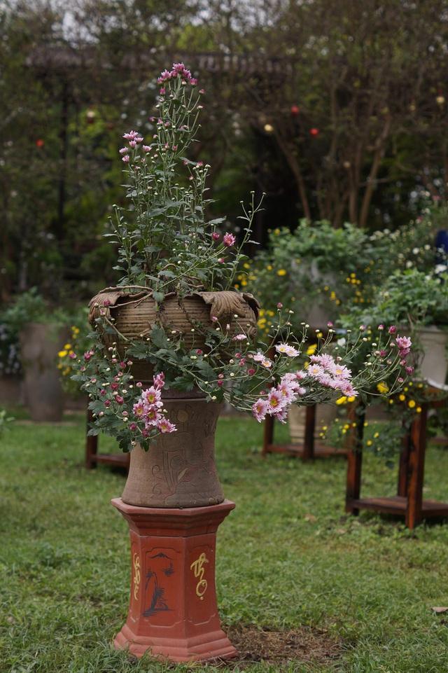 Mãn nhãn với vườn cúc cổ, đẹp mê hồn giữa lòng Hà Nội - 2