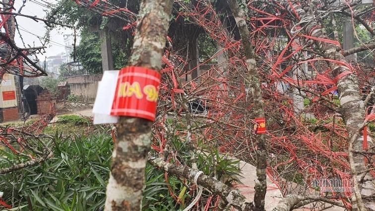 Sơn La nhận 100.000 tem mã vạch, người trồng đào yên tâm buôn bán