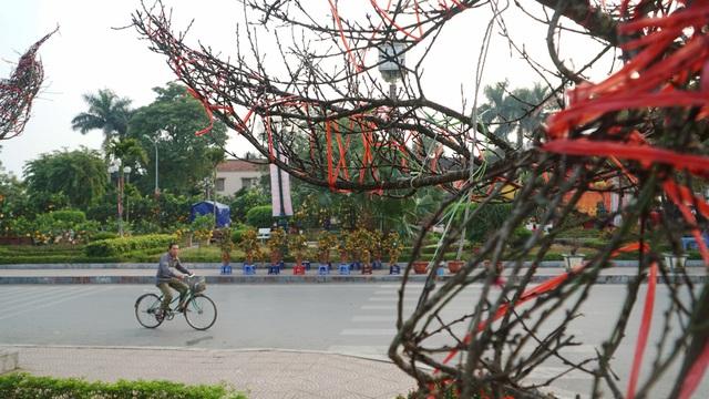 Những cành đào rừng dán tem đầu tiên xuất hiện ở Hà Nội - 3