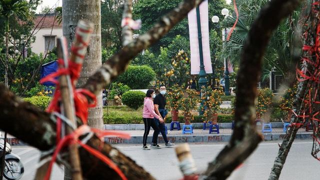 Những cành đào rừng dán tem đầu tiên xuất hiện ở Hà Nội - 10