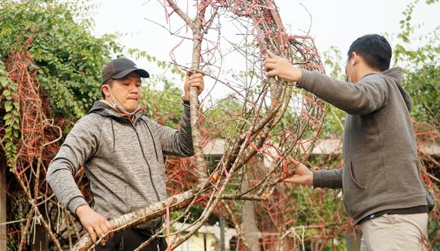 Những cành đào rừng dán tem đầu tiên xuất hiện ở Hà Nội - 13