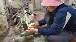 Hà Nội: Thu cả triệu đồng/ngày từ chế tác sừng trâu ngày giáp Tết Tân Sửu