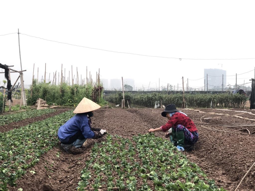 Người dân miệt mài gieo trồng hoa cho vụ sau. Tháng 11 âm lịch trồng thì tháng 4 sẽ được thu hoạch