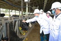Bộ trưởng Nông nghiệp kỳ vọng ngành sữa sớm đạt mục tiêu xuất khẩu 1 tỷ USD