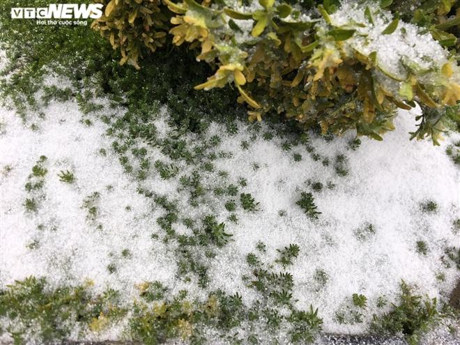 Tuyết rơi bất thường trên đỉnh Fansipan ngày 27 Tết - 4