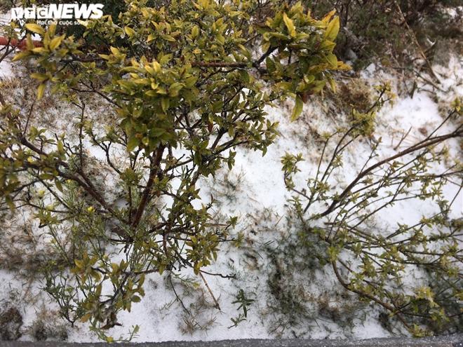 Tuyết rơi bất thường trên đỉnh Fansipan ngày 27 Tết - 3