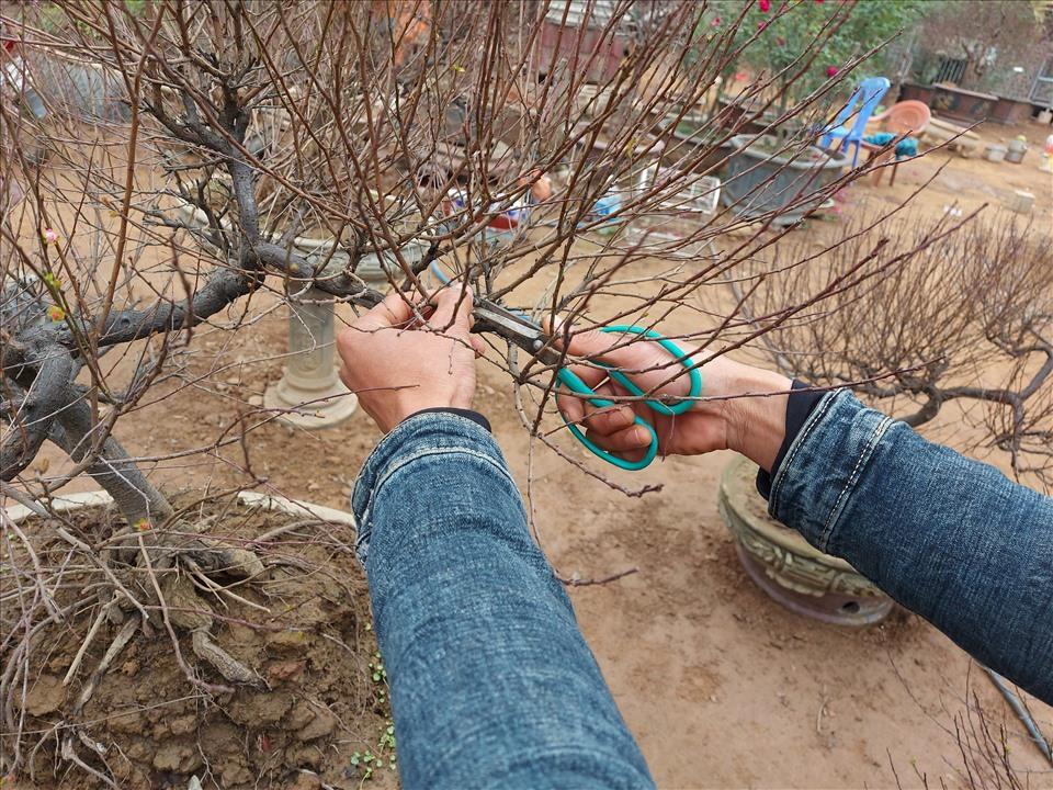 """Thời điểm này người làm vườn tại làng hoa Nhật Tân tranh thủ """"chạy nước rút"""" các công đoạn cuối để kịp giao cho khách. (Ảnh: Lan Như)"""