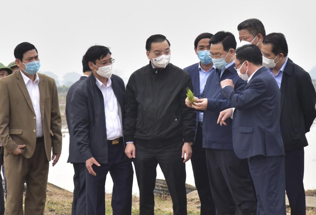 Bí thư Thành ủy Vương Đình Huệ xuống đồng cùng bà con nông dân xã Dị Nậu.