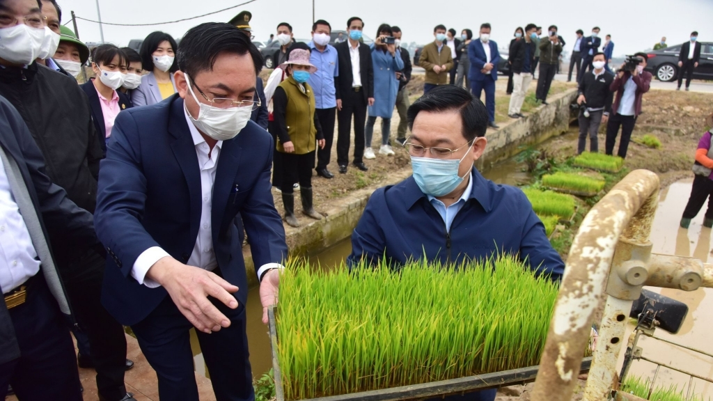 Lãnh đạo thành phố Hà Nội xuống đồng, động viên bà con nông dân ngày đầu năm