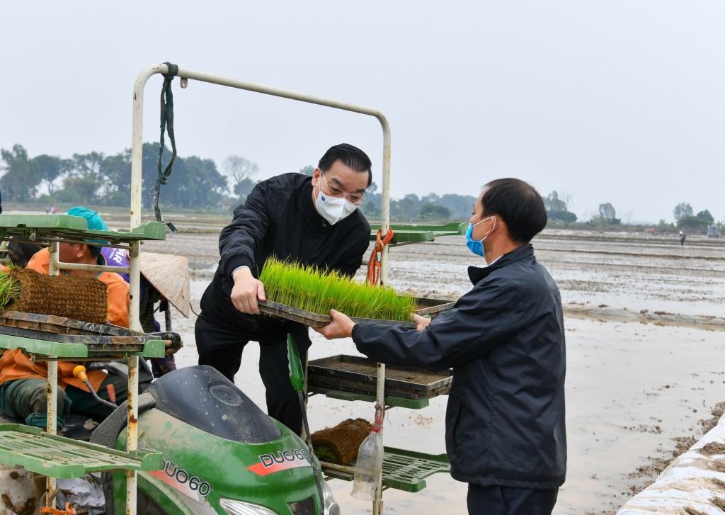 Chủ tịch UBND TP Chu Ngọc Anh xuống đồng cùng bà con nông dân