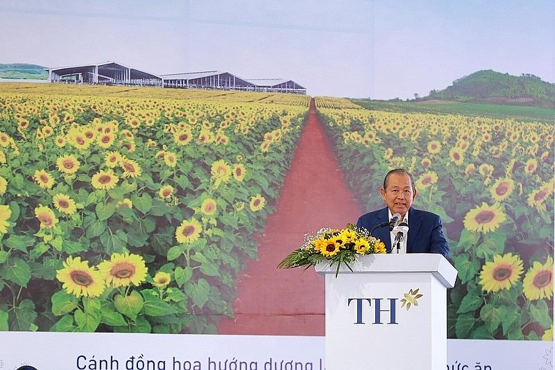Xây trang trại bò sữa ở An Giang: TH sẽ kéo nông dân cùng đi