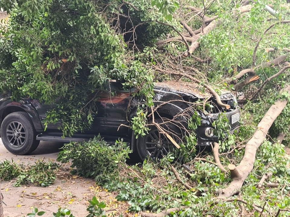 Hà Nội: Cây đổ bất thường trên phố, đè vào 2 ô tô