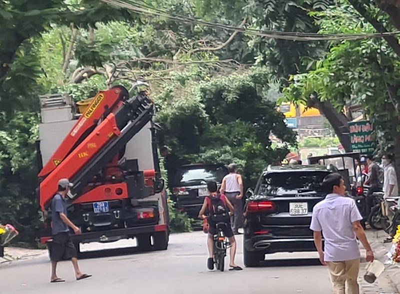 Hà Nội: Cây si to bất ngờ đổ chắn ngang đường