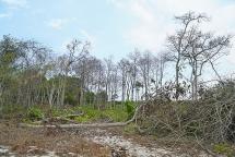 Rừng Tà Cú bị đầu độc