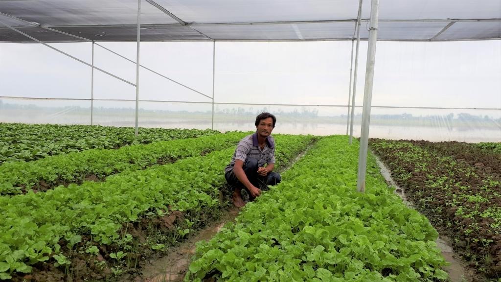 Hà Nội: Rau xanh, thực phẩm dồi dào, giá cả giảm mạnh
