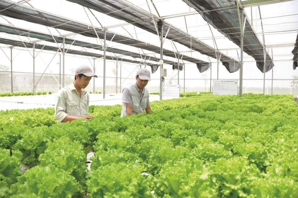 Chuyển nông nghiệp sản lượng cao sang nông nghiệp công nghệ cao, sinh thái