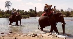Nữ du khách gãy 4 xương sườn, gãy tay khi cưỡi voi ở Tây Nguyên