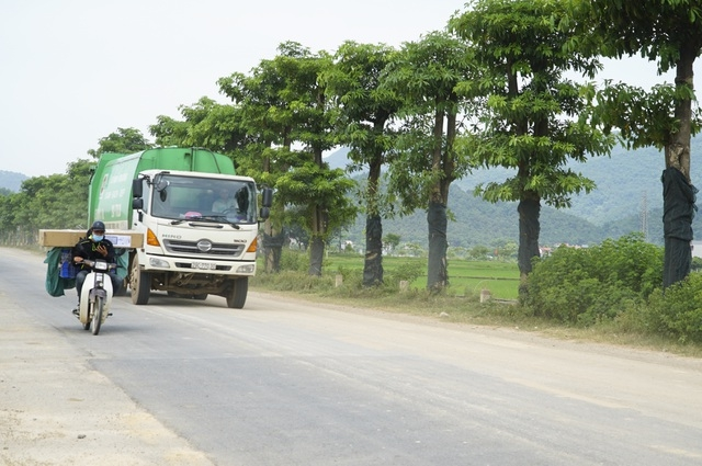 Hàng cây hoa sữa chuyển về bãi rác Nam Sơn sau một năm giờ ra sao?
