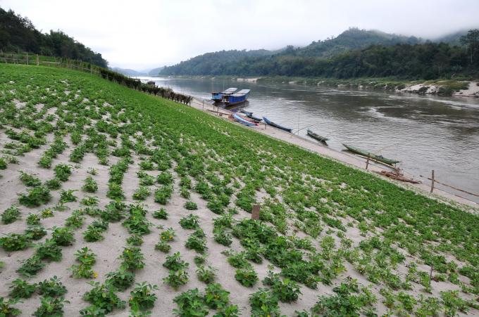 Đoạn sông Mekong chảy qua làng biên giới Pak Beng, nằm giữa biên giới Luang Prabang (Lào) và Huay Xai (Thái Lan). Ảnh: International River