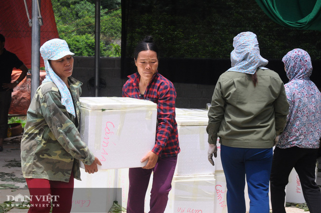 Lạng Sơn: Nhộn nhịp ở chợ Na lớn nhất nước - Ảnh 10.