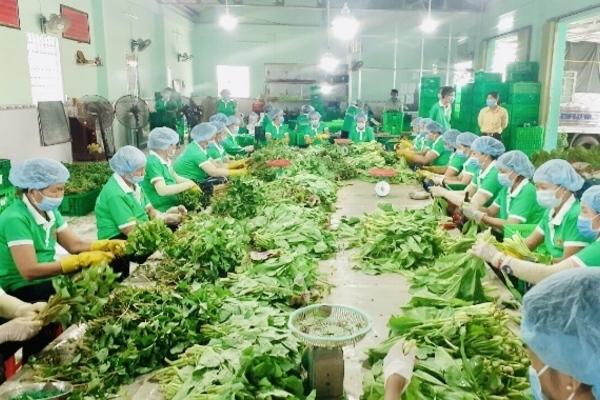"""""""Tổ bán hàng"""" đặc biệt, mỗi ngày chốt đơn 1.000 tấn rau quả"""