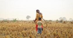 Cảnh báo ozone gây thiệt hại nghiêm trọng cho mùa màng