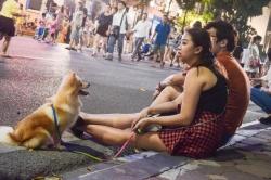 Hà Nội: Phải mặc lịch sự, không nói tục tĩu, dắt vật nuôi ở phố đi bộ hồ Hoàn Kiếm