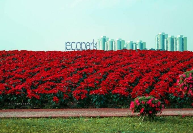 Thiên đường hoa 4 mùa khoe sắc tại Ecopark