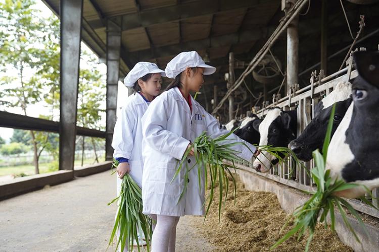 """Học sinh háo hức trải nghiệm tại """"ngôi nhà của các cô bò sữa"""""""