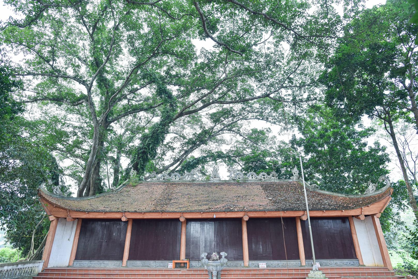 Báu vật đa cổ nghìn năm tuổi độc nhất vô nhị bên ngôi đền thiêng ở Hà Nội - 6