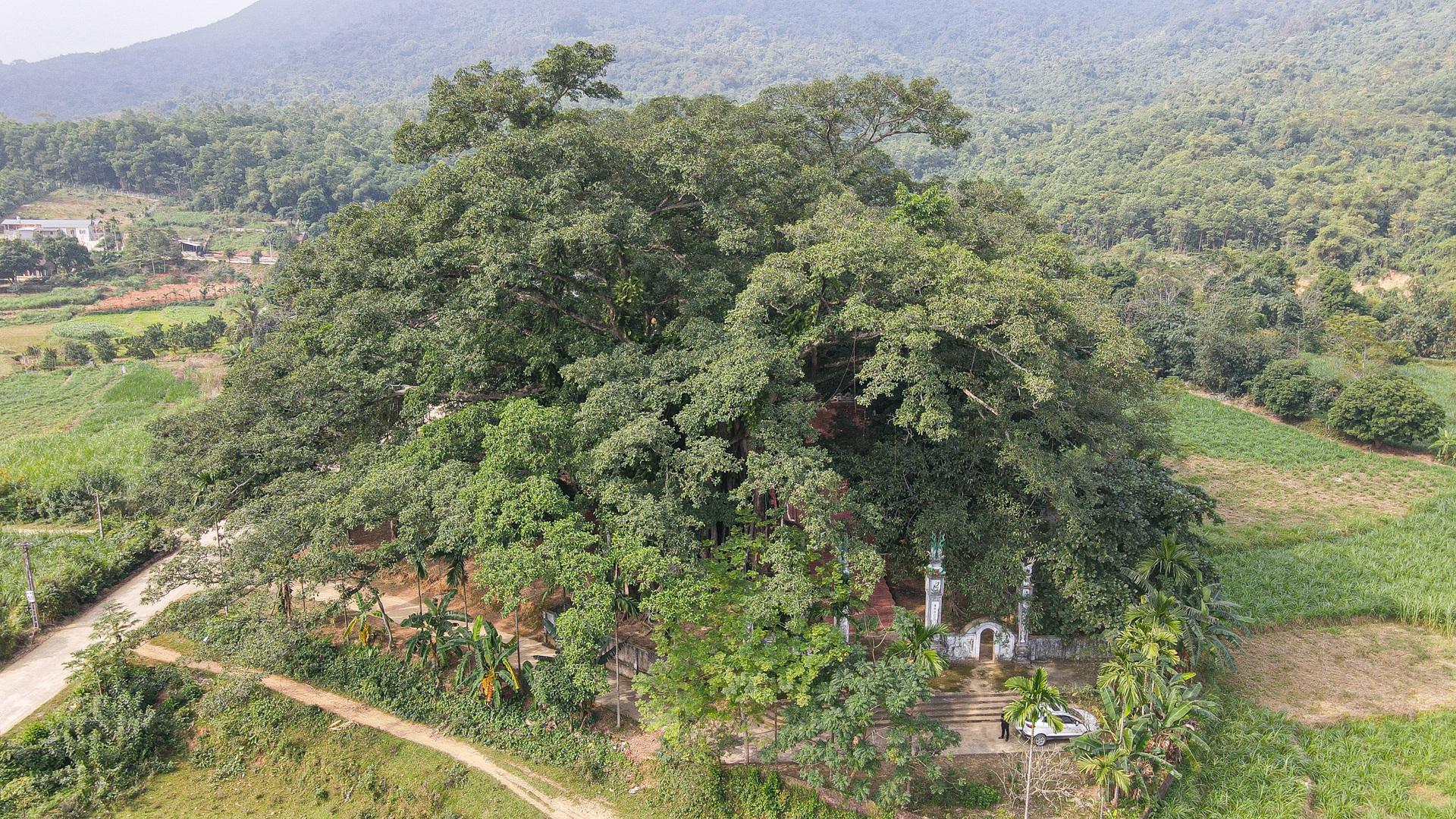 Báu vật đa cổ nghìn năm tuổi độc nhất vô nhị bên ngôi đền thiêng ở Hà Nội - 5