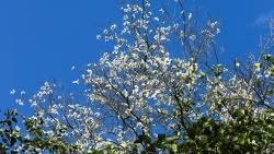 Ngắm biểu tượng hoa của Tây Bắc bung nở khoe sắc tại Đà Lạt
