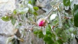 Cảnh báo về đợt rét hiếm gặp, nhiệt độ xuống cực thấp đợt Tết Dương lịch